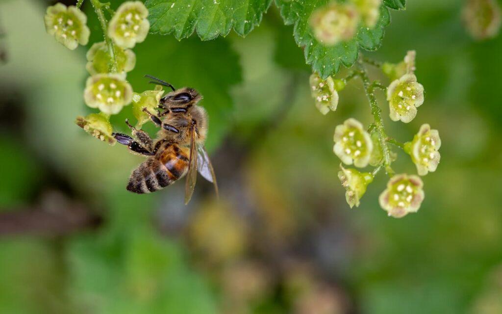 propiedades de la miel natural
