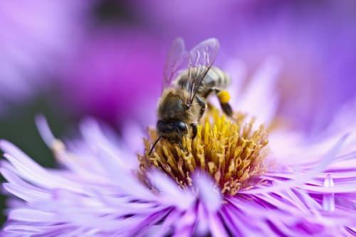 beneficios miel de flores